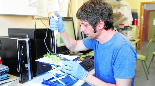 Somos pioneros en secuenciar el ADN completo de un ser vivo en un centro público de enseñanza