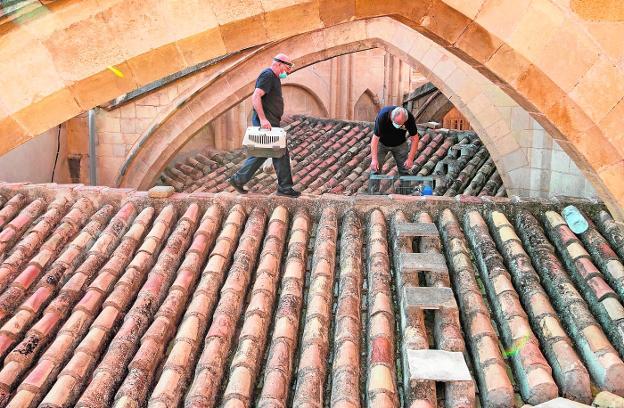 Los operarios municipales revisan las capturas del día en una de las jaulas de los tejados laterales de la Catedral. / JAVIER CARRIÓN / AGM